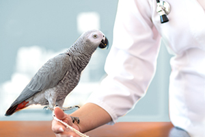 Image of grey parrot standing on an arm